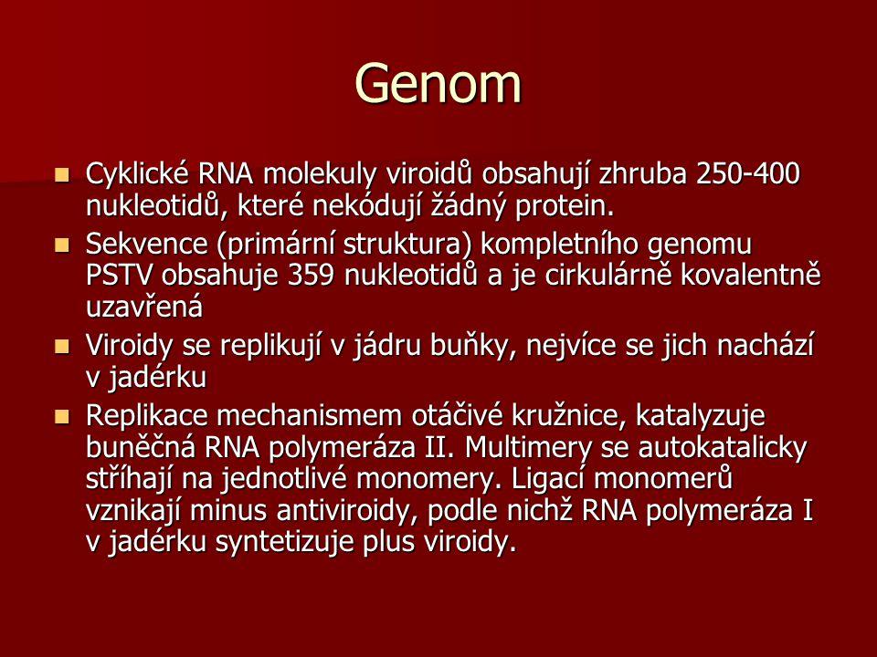 Genom Cyklické RNA molekuly viroidů obsahují zhruba 250-400 nukleotidů, které nekódují žádný protein. Cyklické RNA molekuly viroidů obsahují zhruba 25