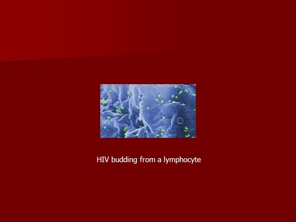 HIV budding from a lymphocyte