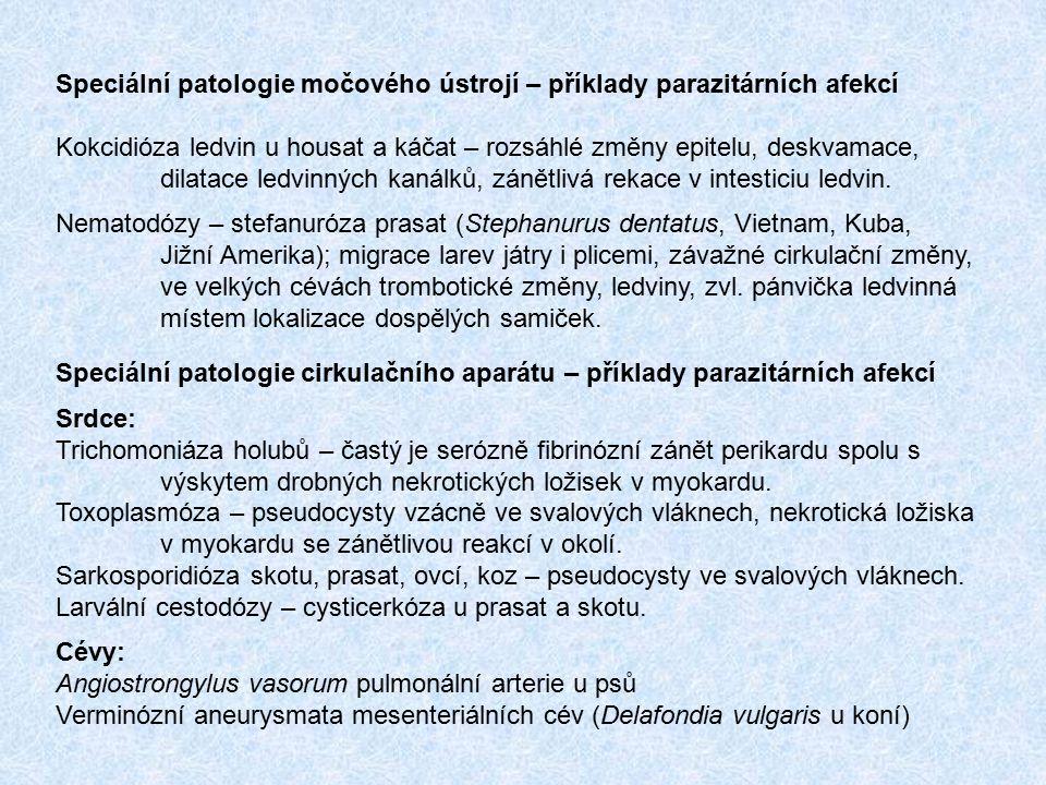 Speciální patologie močového ústrojí – příklady parazitárních afekcí Kokcidióza ledvin u housat a káčat – rozsáhlé změny epitelu, deskvamace, dilatace
