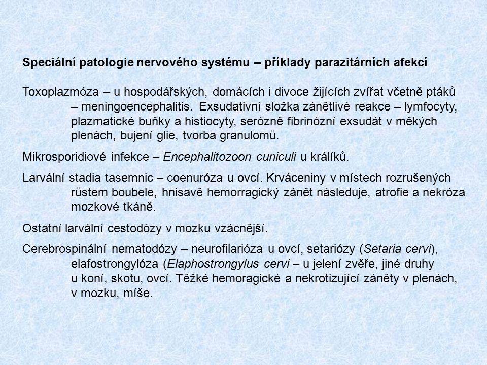 Speciální patologie nervového systému – příklady parazitárních afekcí Toxoplazmóza – u hospodářských, domácích i divoce žijících zvířat včetně ptáků –