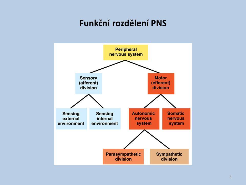 Funkční rozdělení PNS 2