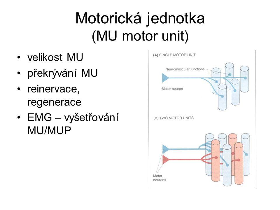 Motorická jednotka (MU motor unit) velikost MU překrývání MU reinervace, regenerace EMG – vyšetřování MU/MUP
