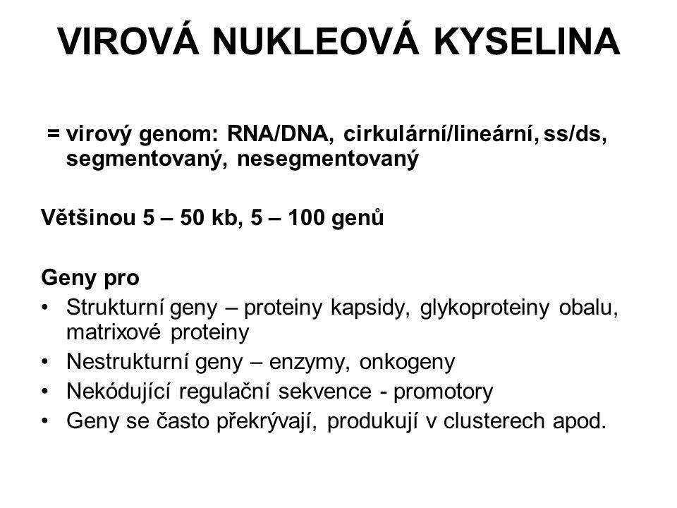 VIROVÁ NUKLEOVÁ KYSELINA = virový genom: RNA/DNA, cirkulární/lineární, ss/ds, segmentovaný, nesegmentovaný Většinou 5 – 50 kb, 5 – 100 genů Geny pro S