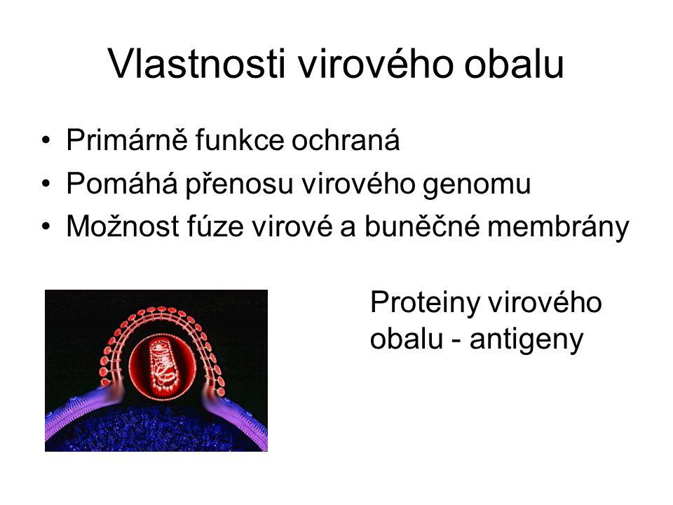 Vlastnosti virového obalu Primárně funkce ochraná Pomáhá přenosu virového genomu Možnost fúze virové a buněčné membrány Proteiny virového obalu - anti