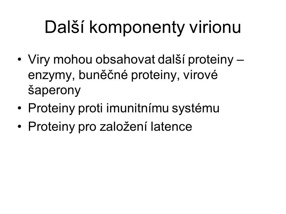 Další komponenty virionu Viry mohou obsahovat další proteiny – enzymy, buněčné proteiny, virové šaperony Proteiny proti imunitnímu systému Proteiny pr