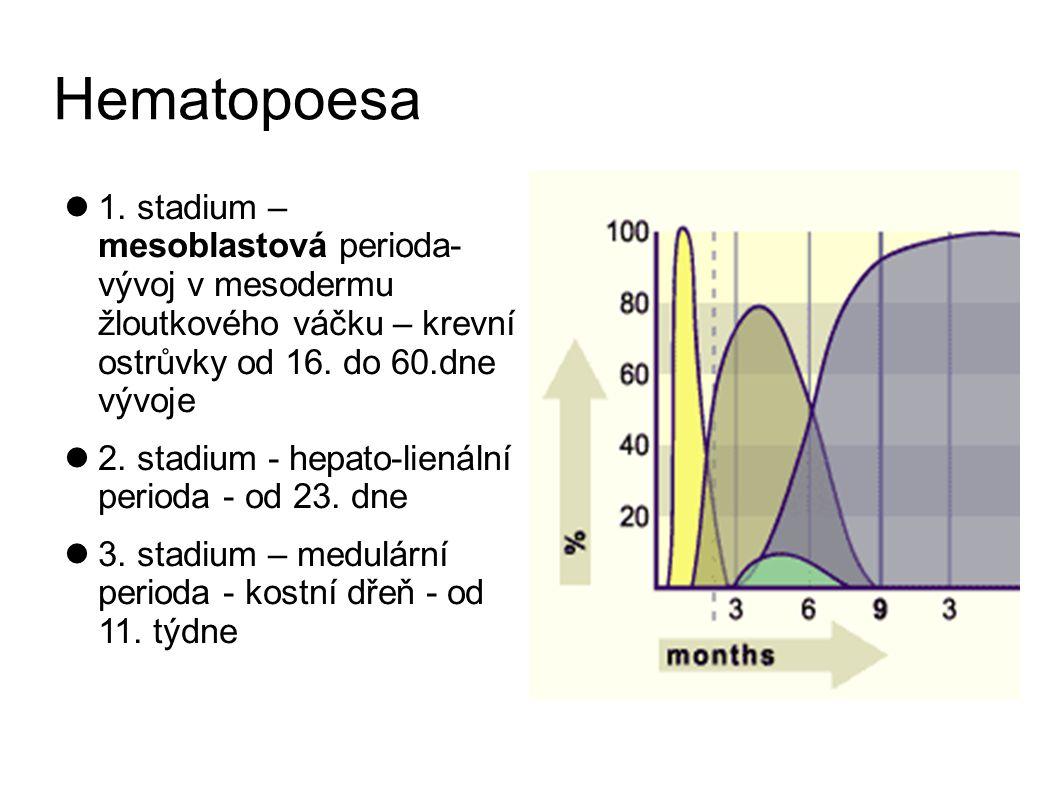 Orthochromatofilní erytroblast E5