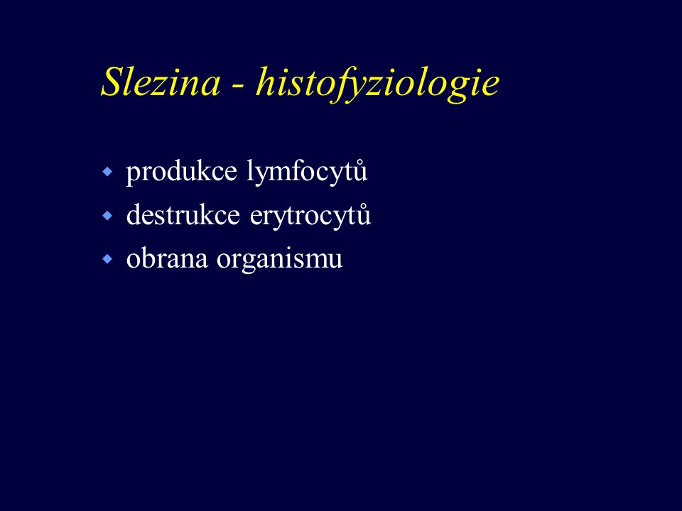 Slezina - histofyziologie w produkce lymfocytů w destrukce erytrocytů w obrana organismu