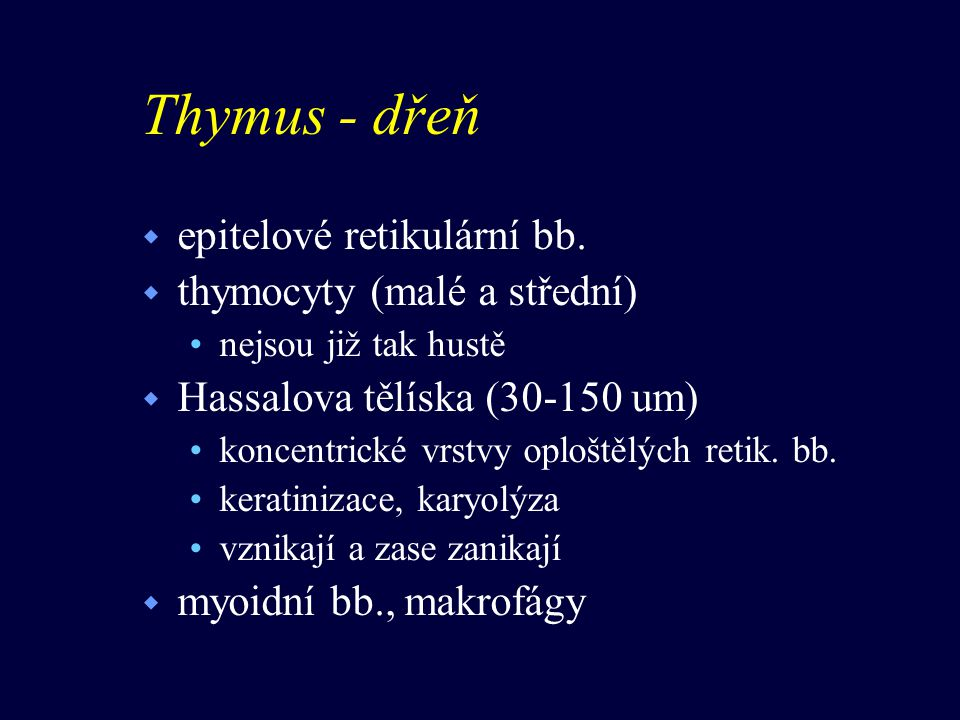 Thymus - dřeň w epitelové retikulární bb.