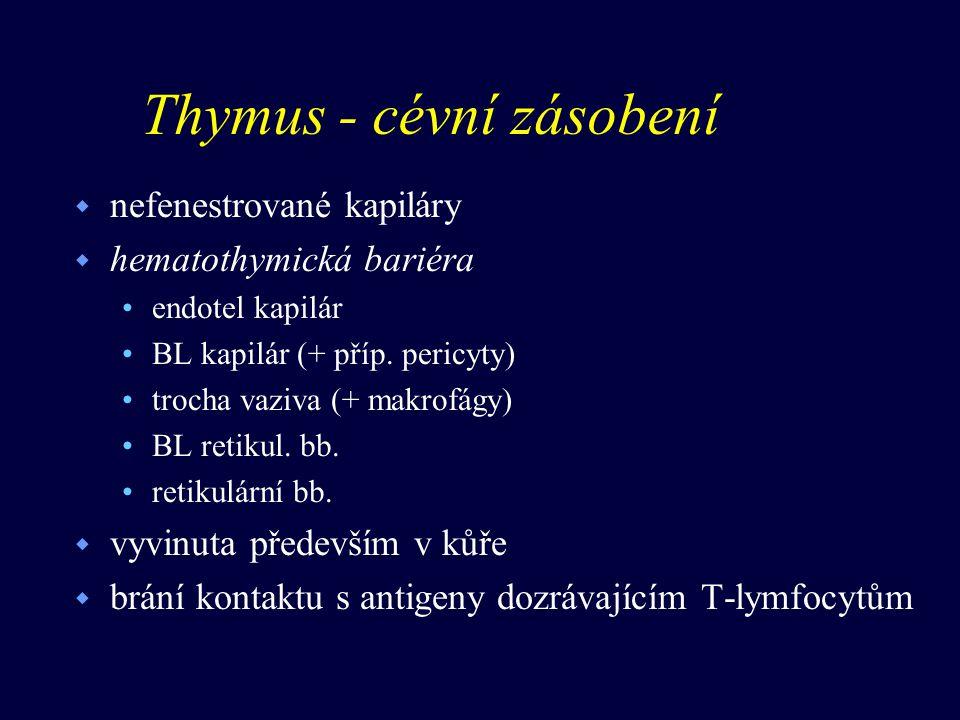 Thymus - histofyziologie w množení T-lymfocytů opouštějí thymus (dření) (cca 10%) do uzlin, Peyer.