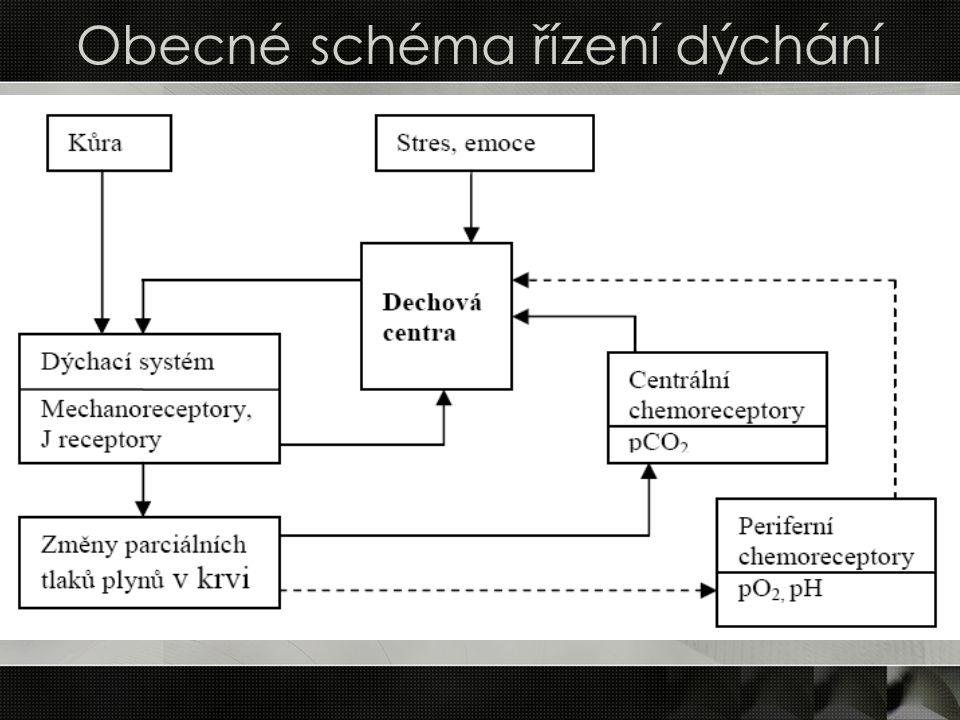 Obecné schéma řízení dýchání
