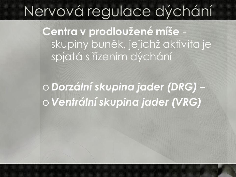 Nervová regulace dýchání Centra v prodloužené míše - skupiny buněk, jejichž aktivita je spjatá s řízením dýchání o Dorzální skupina jader (DRG) – o Ve