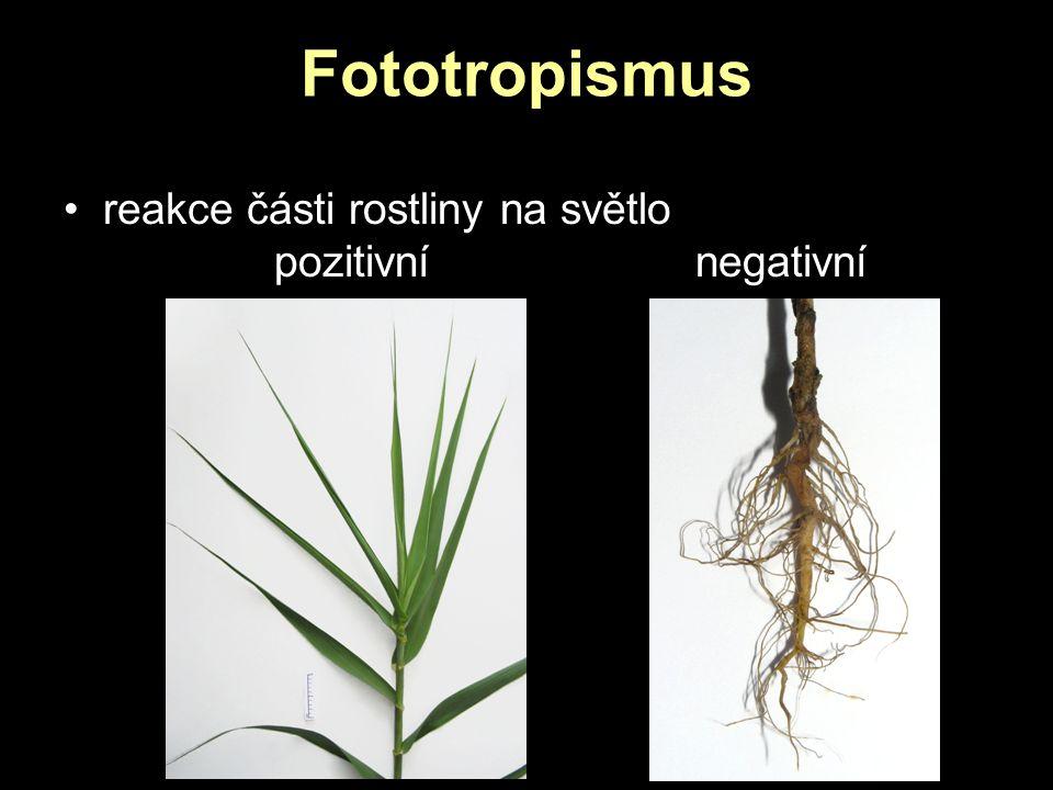 Fototropismus reakce části rostliny na světlo pozitivnínegativní