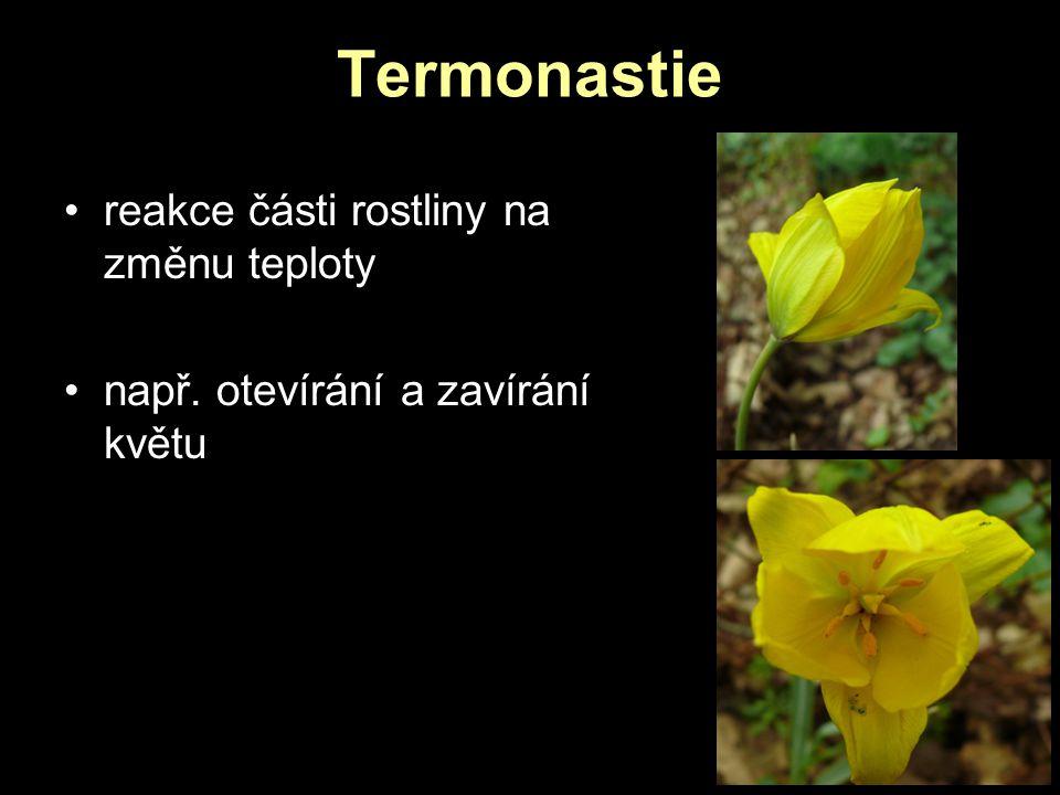 Termonastie reakce části rostliny na změnu teploty např. otevírání a zavírání květu