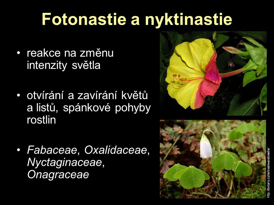 Fotonastie a nyktinastie reakce na změnu intenzity světla otvírání a zavírání květů a listů, spánkové pohyby rostlin Fabaceae, Oxalidaceae, Nyctaginac