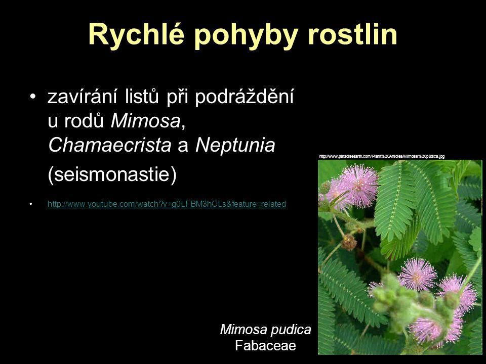 zavírání listů při podráždění u rodů Mimosa, Chamaecrista a Neptunia (seismonastie) http://www.youtube.com/watch?v=g0LFBM3hOLs&feature=related Mimosa