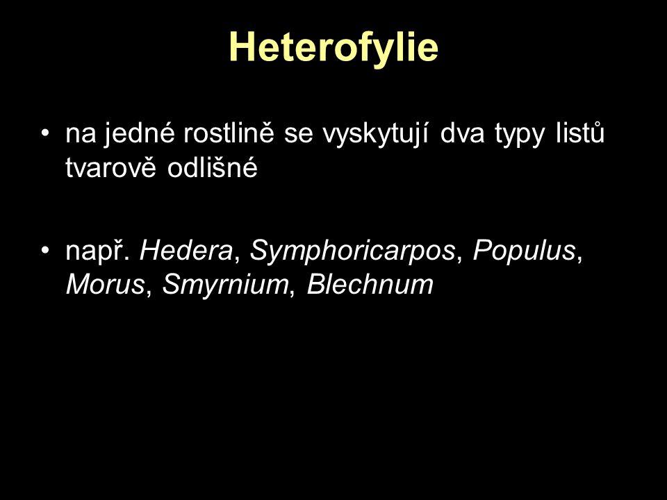Heterofylie na jedné rostlině se vyskytují dva typy listů tvarově odlišné např. Hedera, Symphoricarpos, Populus, Morus, Smyrnium, Blechnum