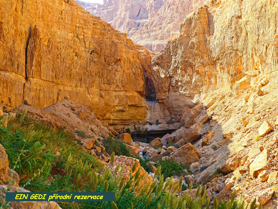 עין גדי EIN GEDI vesnice a přírodní rezervace