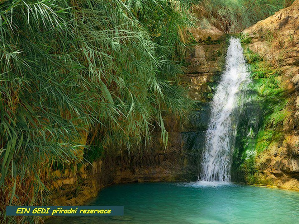EIN GEDI přírodní rezervace