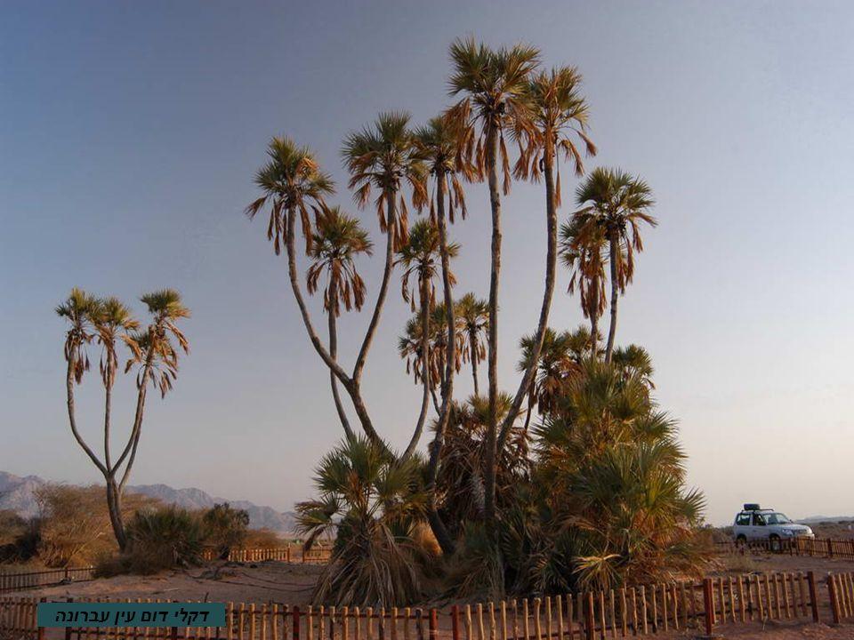 מפרץ אילת Záliv Eilat