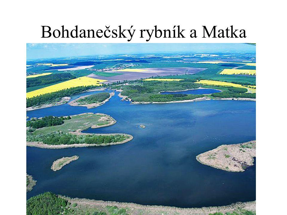 Bohdanečský rybník a Matka