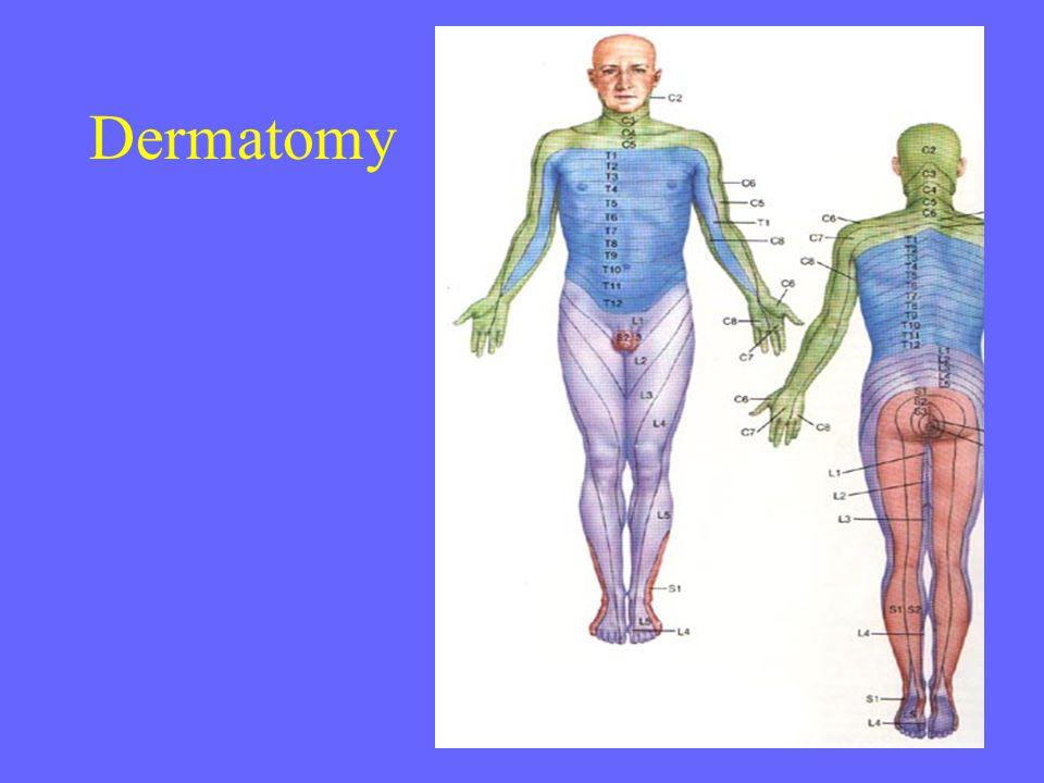 Dermatomy