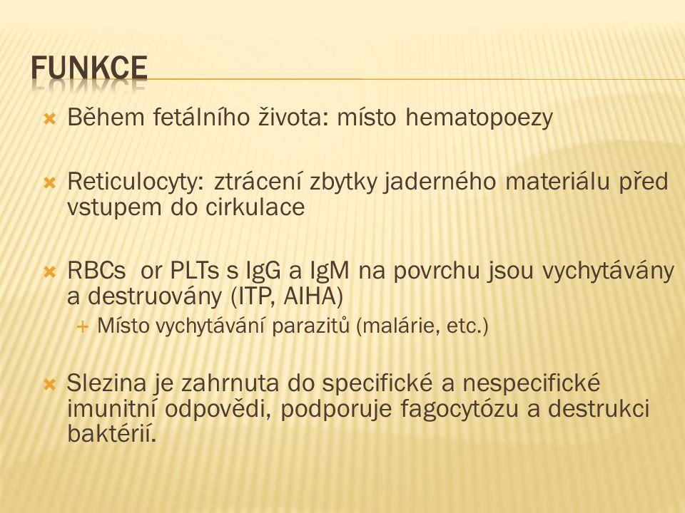  Během fetálního života: místo hematopoezy  Reticulocyty: ztrácení zbytky jaderného materiálu před vstupem do cirkulace  RBCs or PLTs s IgG a IgM n
