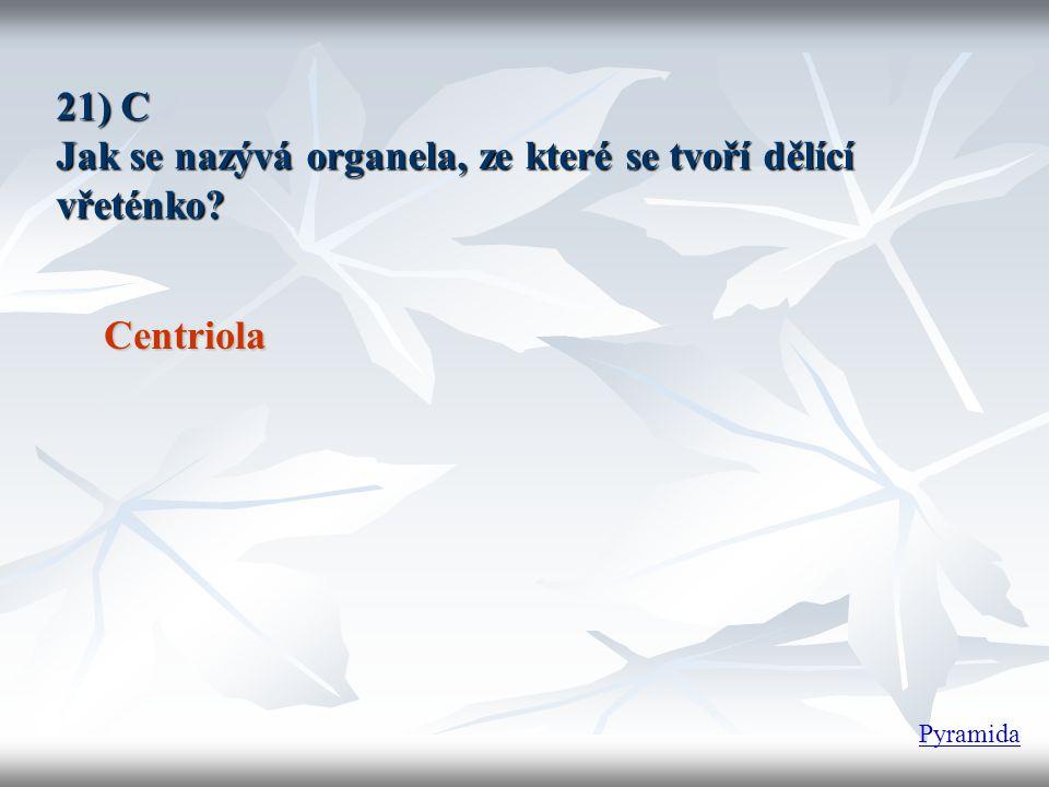21) C Jak se nazývá organela, ze které se tvoří dělící vřeténko? Centriola Pyramida