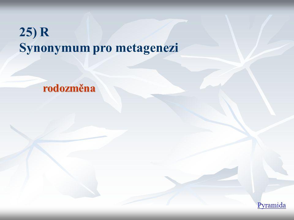rodozměna 25) R Synonymum pro metagenezi Pyramida