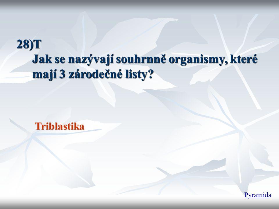 28)T Jak se nazývají souhrnně organismy, které mají 3 zárodečné listy? Triblastika Pyramida