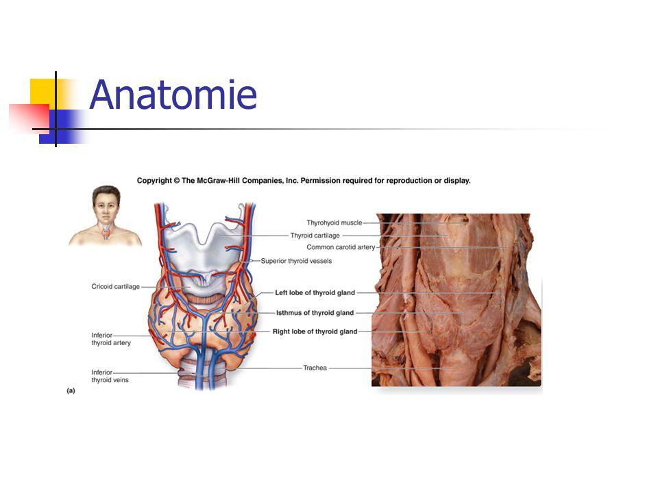 Poporodní thyroiditida 5-10% žen do roku od porodu Obvykle 3.-6.