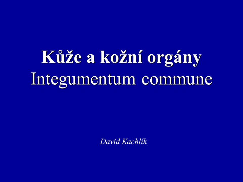 Kůže a kožní orgány Integumentum commune David Kachlík