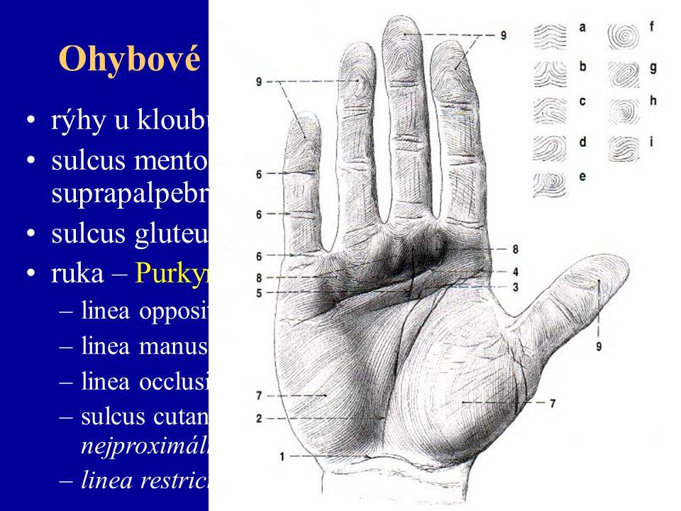 Ohybové rýhy (lineae distractiones) rýhy u kloubů, vrásky sulcus mentolabialis, nasolabialis, suprapalpebralis, infrapalpebralis sulcus gluteus, crena analis ruka – Purkyně - chiromantie –linea oppositionis pollicis (vitalis) –linea manus clausae (cephalica, naturalis) –linea occlusionis dig.