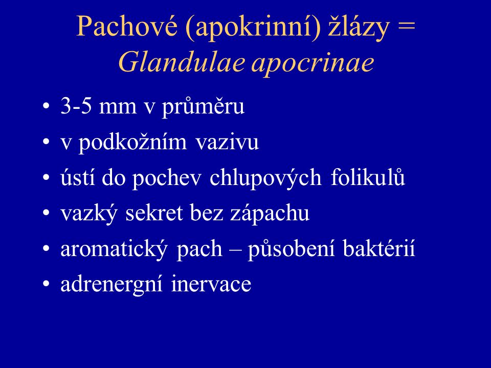 Pachové (apokrinní) žlázy = Glandulae apocrinae 3-5 mm v průměru v podkožním vazivu ústí do pochev chlupových folikulů vazký sekret bez zápachu aromatický pach – působení baktérií adrenergní inervace