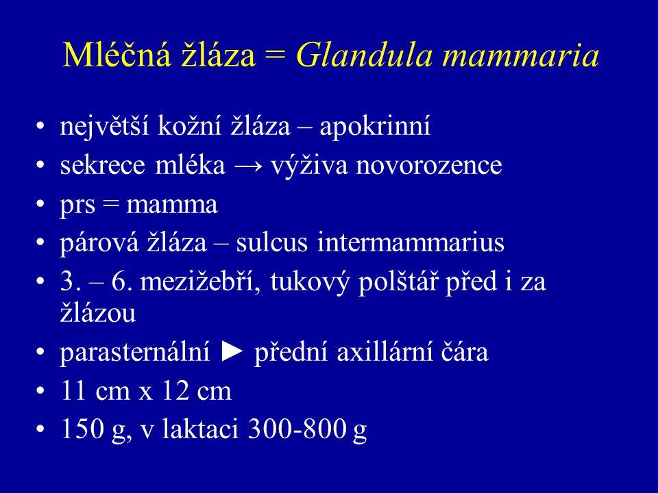 Mléčná žláza = Glandula mammaria největší kožní žláza – apokrinní sekrece mléka → výživa novorozence prs = mamma párová žláza – sulcus intermammarius 3.