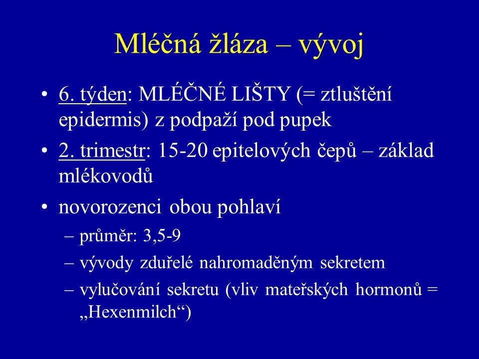 Mléčná žláza – vývoj 6.týden: MLÉČNÉ LIŠTY (= ztluštění epidermis) z podpaží pod pupek 2.