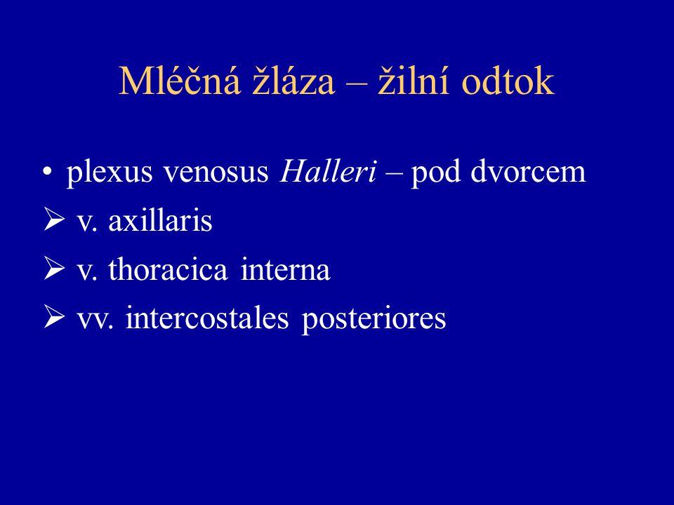 Mléčná žláza – žilní odtok plexus venosus Halleri – pod dvorcem  v.