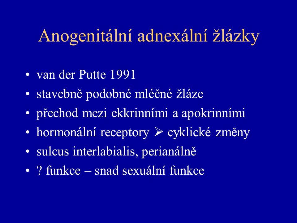 Anogenitální adnexální žlázky van der Putte 1991 stavebně podobné mléčné žláze přechod mezi ekkrinními a apokrinními hormonální receptory  cyklické změny sulcus interlabialis, perianálně .