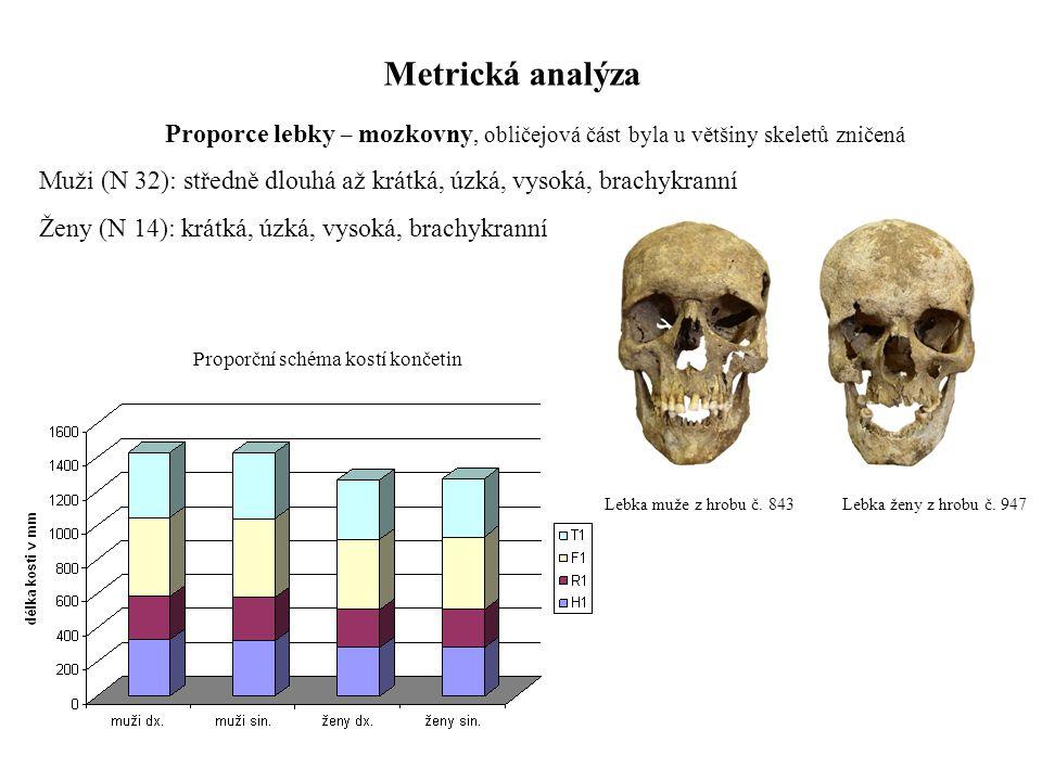 Metrická analýza Proporce lebky – mozkovny, obličejová část byla u většiny skeletů zničená Muži (N 32): středně dlouhá až krátká, úzká, vysoká, brachy