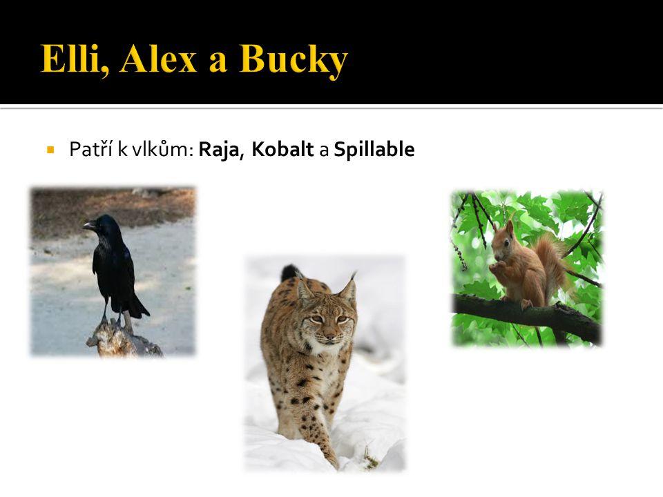  Patří k vlkům: Raja, Kobalt a Spillable