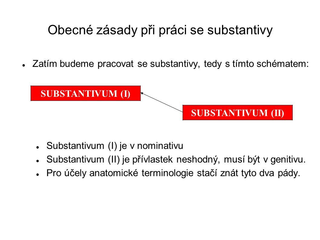 Obecné zásady při práci se substantivy Zatím budeme pracovat se substantivy, tedy s tímto schématem: Substantivum (I) je v nominativu Substantivum (II