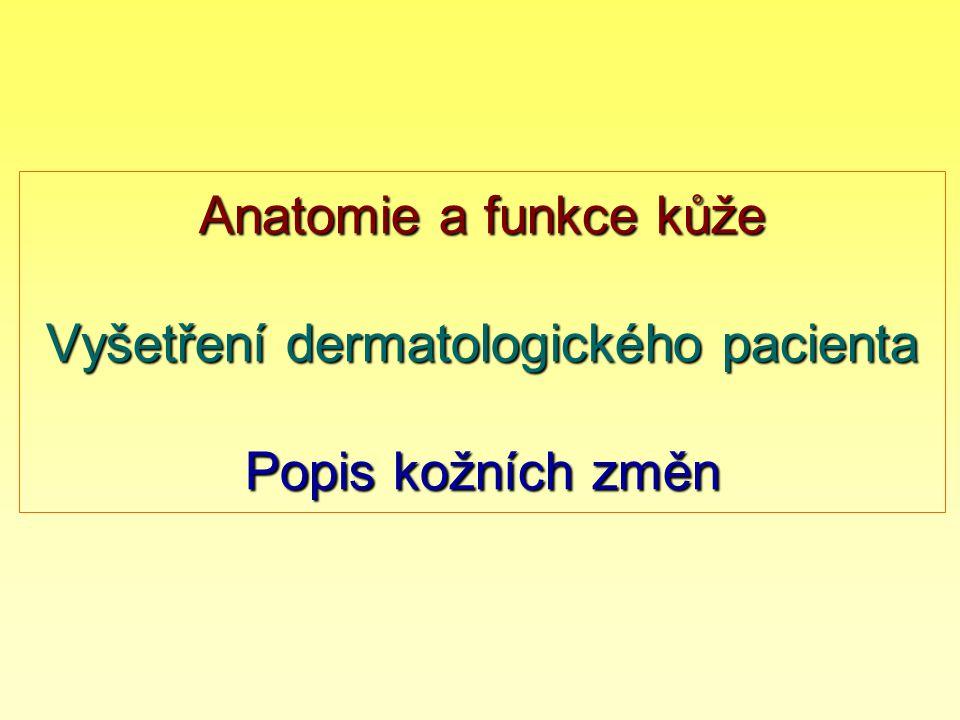 Kůže je naším prakticky největším orgánem epidermis 0,03 (víčko) - 0,1mm - 2mm (ploska) dermis 0,6mm (víčko) - 2mm (trup) 3mm (ploska) podkožní tuková tkáň 0,6mm (víčko) - 4mm (HKK) až několik cm (hyždě, břicho) ● tloušťka kůže závisí na lokalizaci, věku a výživě ● kožní povrch = 1,5 - 2m 2 ● hmotnost odpovídá 1/5 tělesné hmotnosti