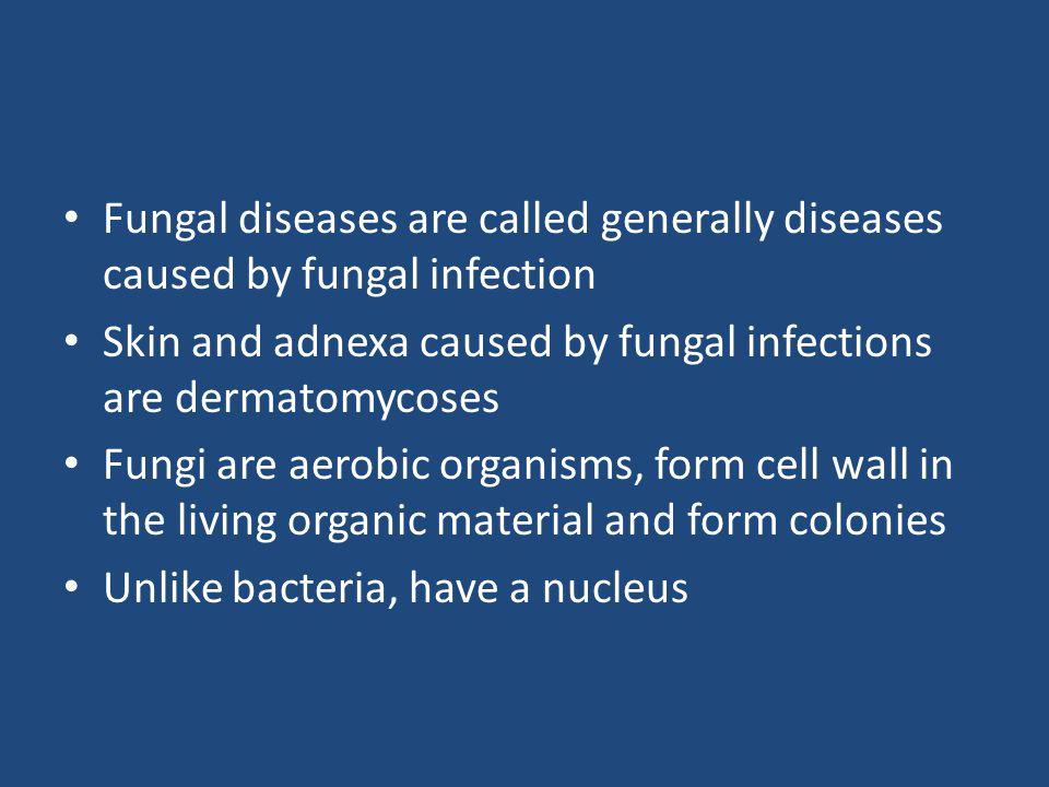 Origin of skin mycoses 1/ 2/ 3/ dermatophytes yeast Oportunic micromycetes