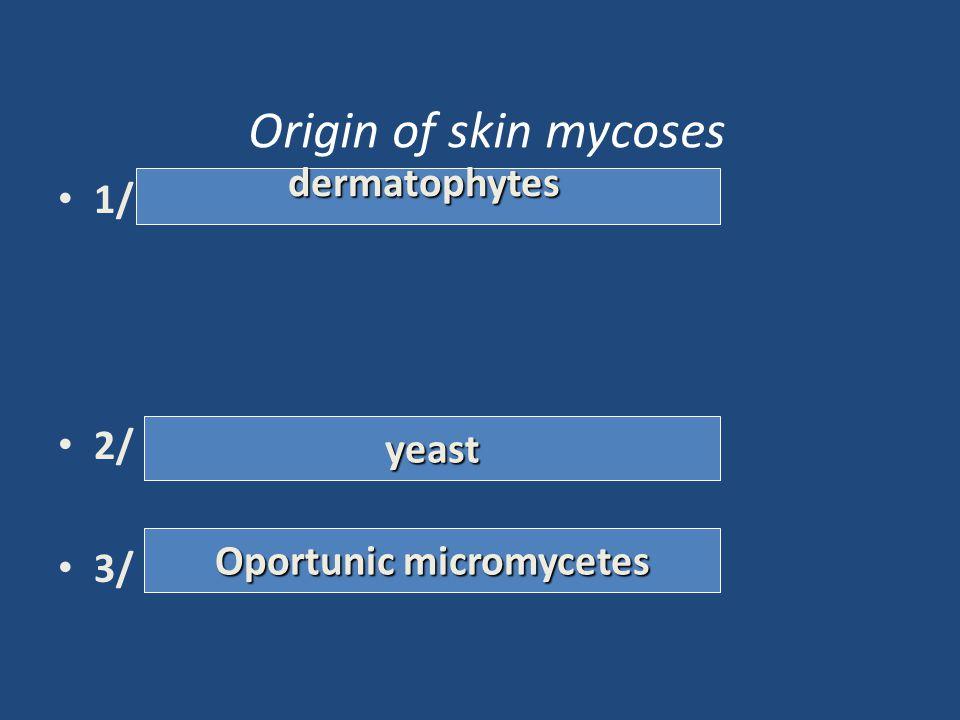 Origin of skin mycoses 1/ 2/ 3/ dermatophytic yeast oportunní mikromycety antropofilní zoofilní geofilní