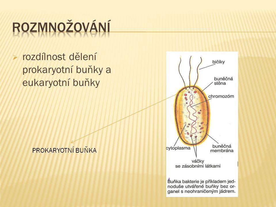  rozdílnost dělení prokaryotní buňky a eukaryotní buňky PROKARYOTNÍ BUŇKA