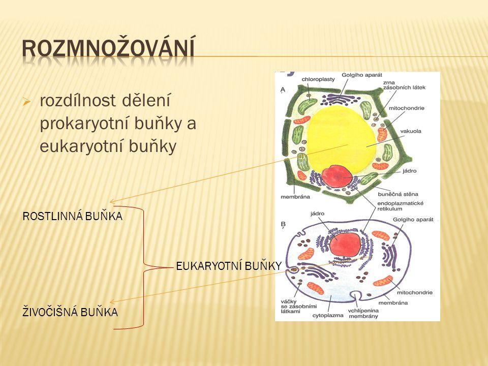  příklady prokaryotních a eukaryotních buněk EUKARYOTNÍ BUŇKA PROKARYOTNÍ BUŇKA EUKARYOTNÍ BUŇKA