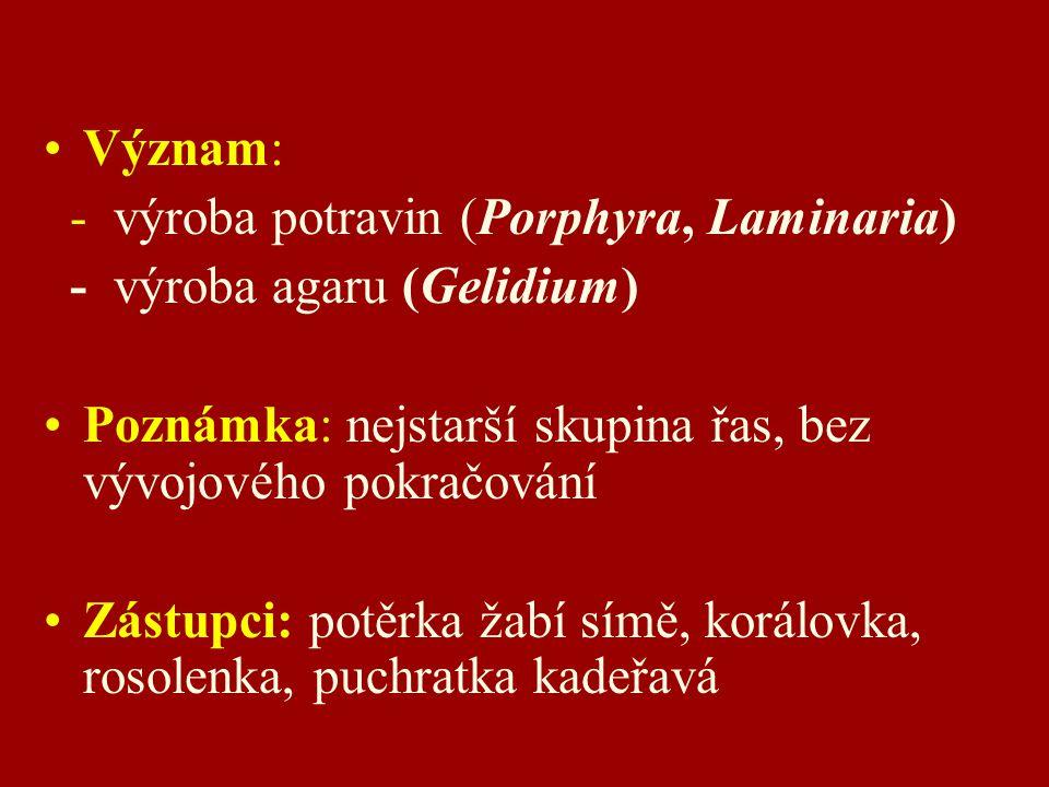 Význam: - výroba potravin (Porphyra, Laminaria) - výroba agaru (Gelidium) Poznámka: nejstarší skupina řas, bez vývojového pokračování Zástupci: potěrka žabí símě, korálovka, rosolenka, puchratka kadeřavá