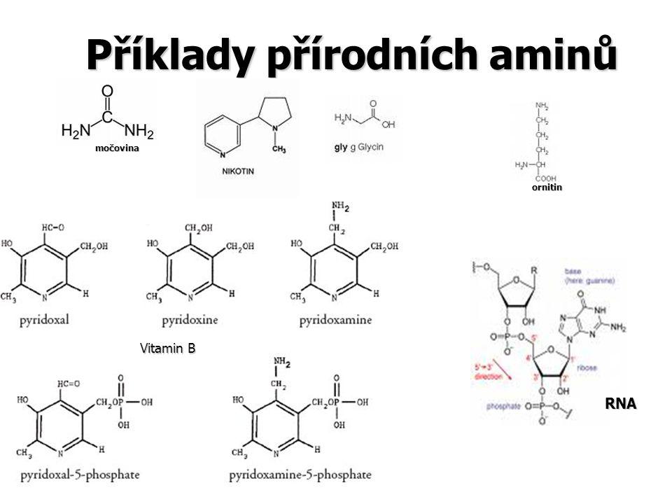 Příklady přírodních aminů močovina ornitin Vitamin B RNA