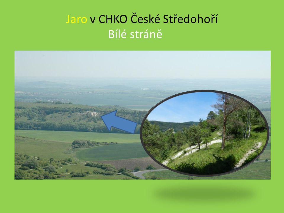 Jaro v CHKO České Středohoří Bílé stráně