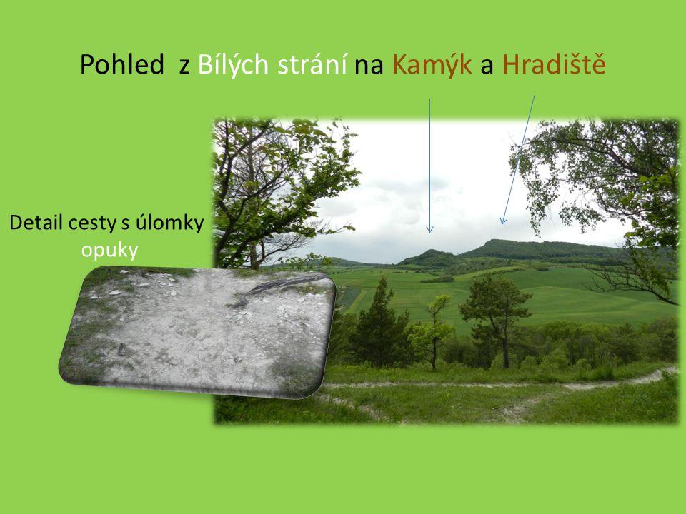 Pohled z Bílých strání na Kamýk a Hradiště Detail cesty s úlomky opuky