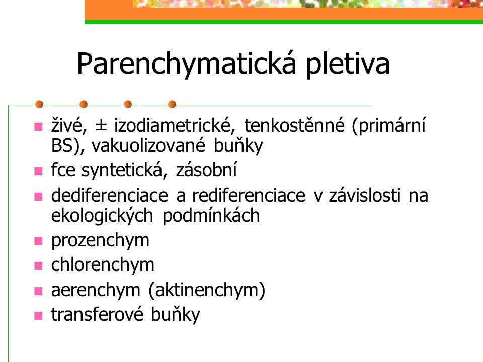 Parenchymatická pletiva živé, ± izodiametrické, tenkostěnné (primární BS), vakuolizované buňky fce syntetická, zásobní dediferenciace a rediferenciace